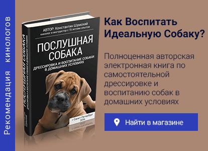 Дископатия у собак породы такса, черный акантоз и другие болезни: симптомы, лечение, профилактика