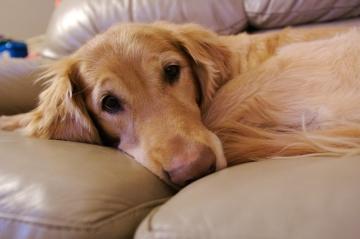Почему собаку трясет мелкой дрожью