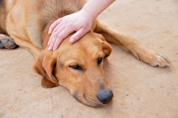 Задние лапы собаки
