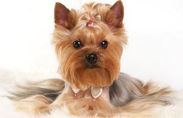 Купить домик для собаки в интернет-магазине недорого