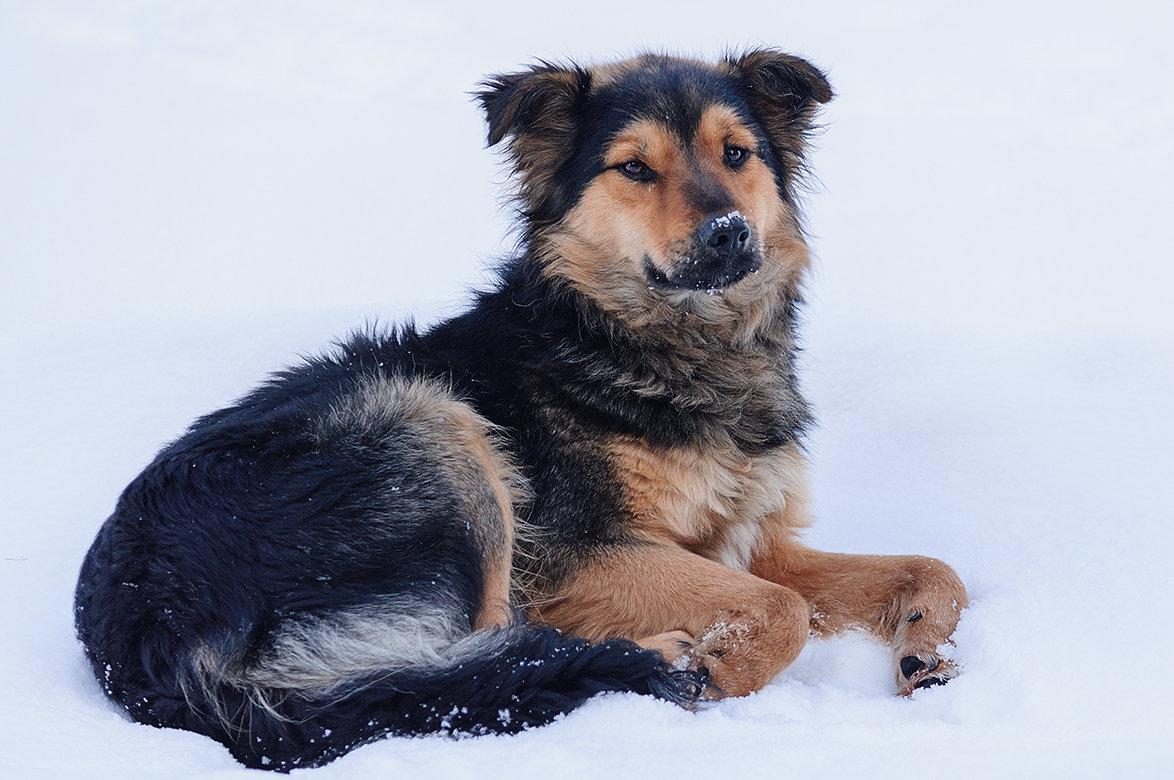 порода собак дворняжка фото катафалки предназначены