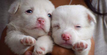 клички для собак мальчиков и собак девочек